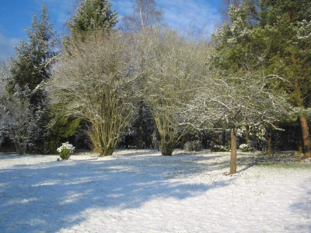 In the garden in winter