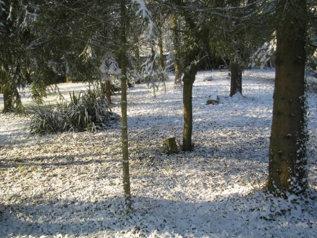 In the garden in winter